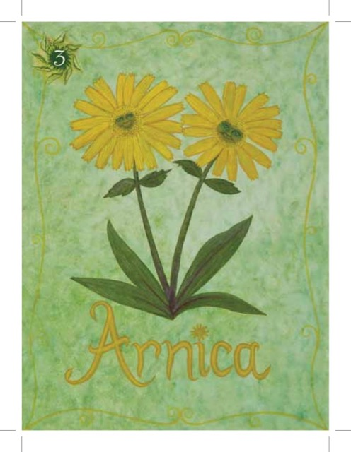 Natures Creation ARNICA
